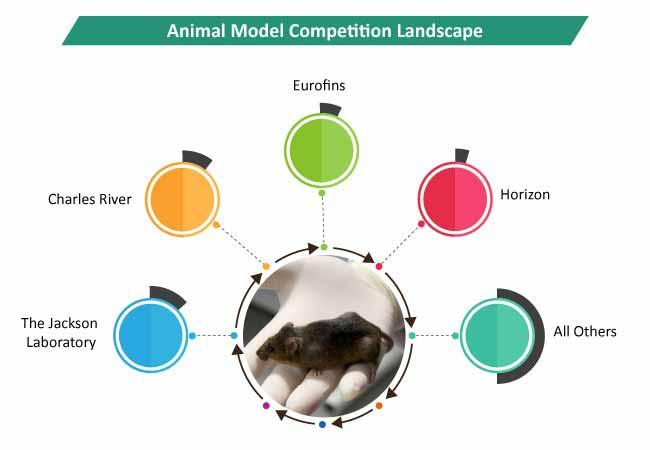 animal model industry 2