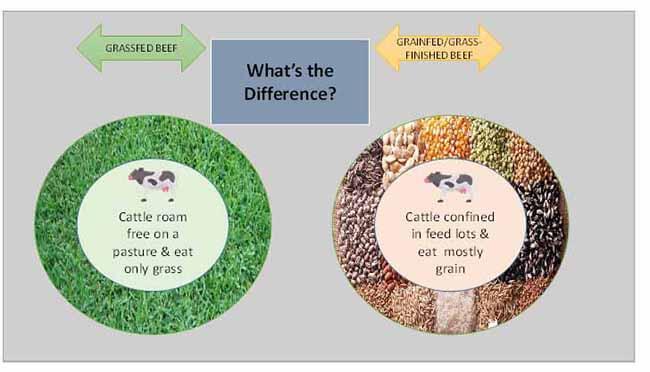 global grassfed meat market01