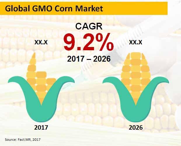 gmo corn market
