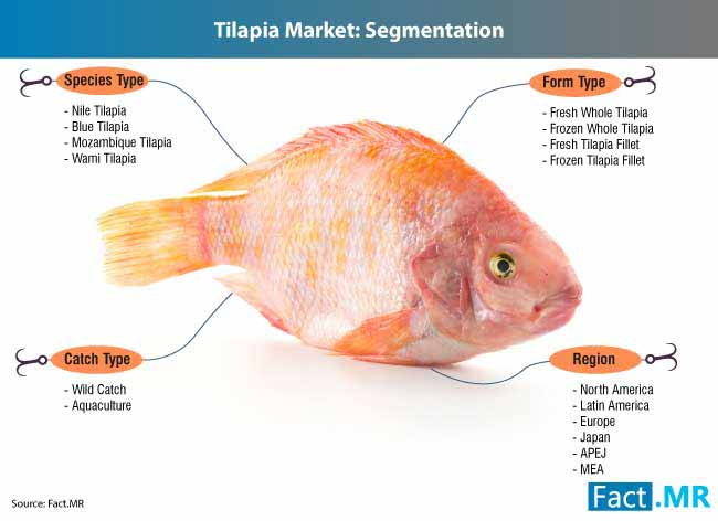 tilapia industry 3